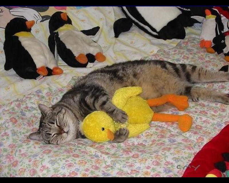 У котиков есть свои любимые вещи и игрушки животные, интересное, кошки