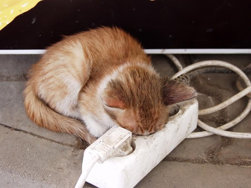 Они могут уснуть где удобно животные, интересное, кошки