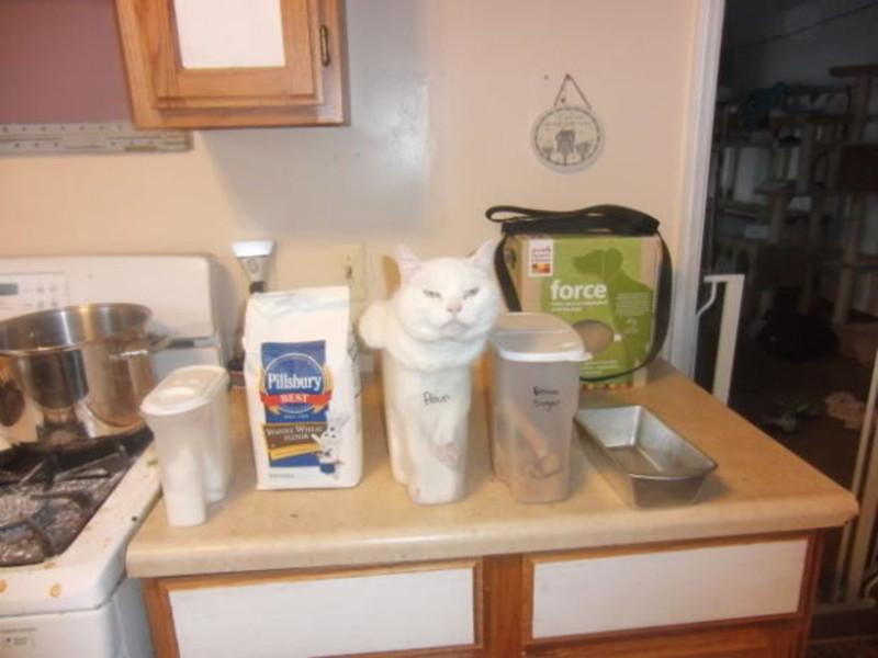 Котики - это жидкость животные, интересное, кошки