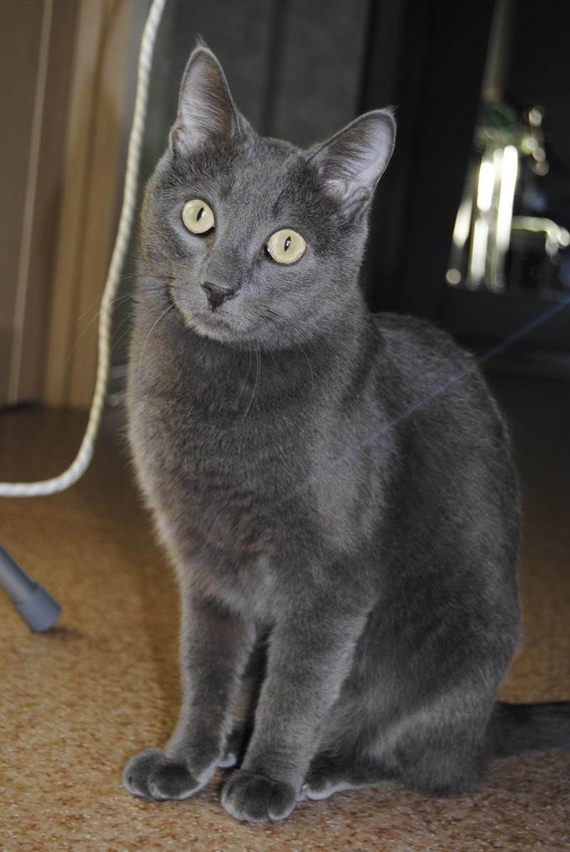 20 вещей, которые поймут только кошатники животные, интересное, кошки