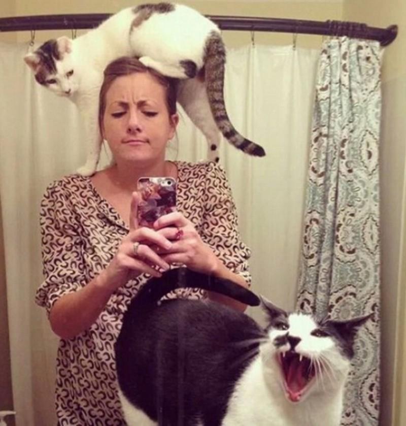 Они очень любят есть и настойчиво требуют животные, интересное, кошки