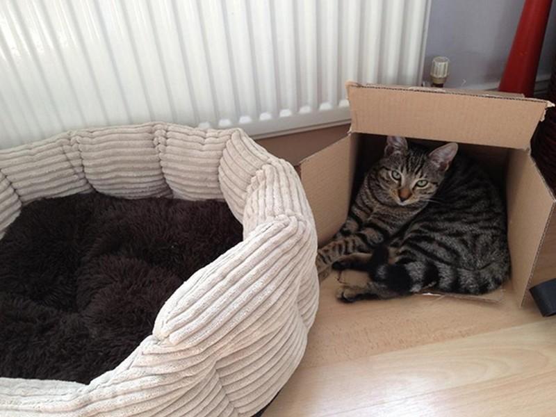И любят коробки животные, интересное, кошки