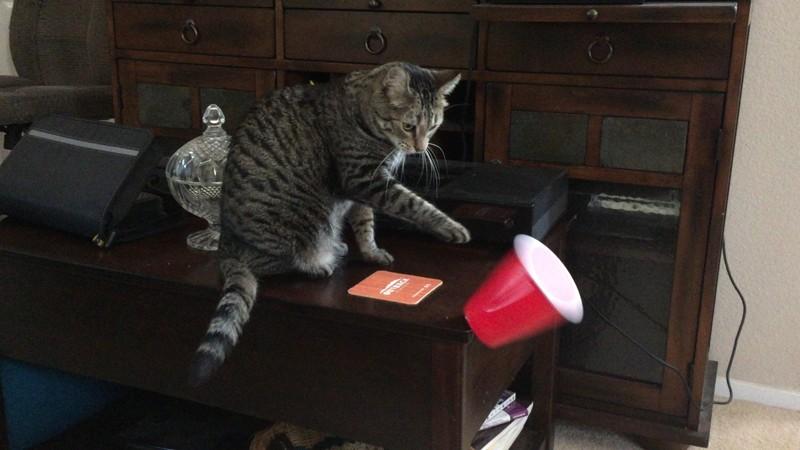Они наводят порядок животные, интересное, кошки