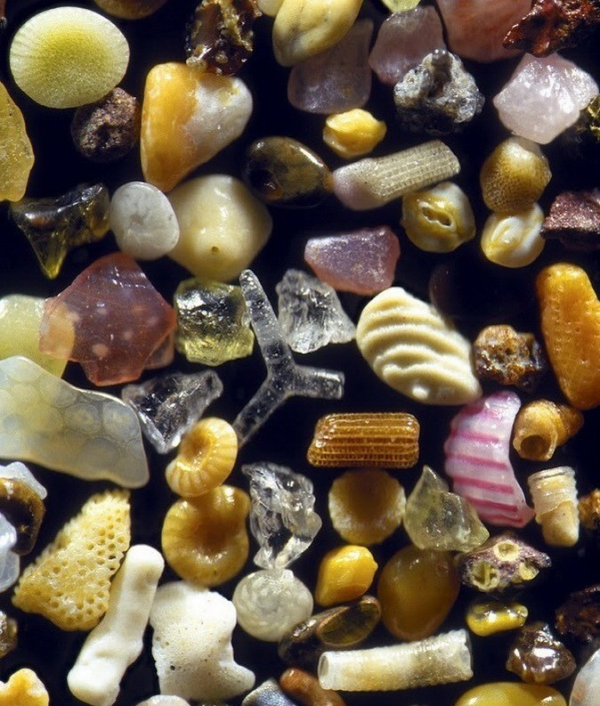 12. Песок под микроскопом Прикольные фото, животные, чудеса