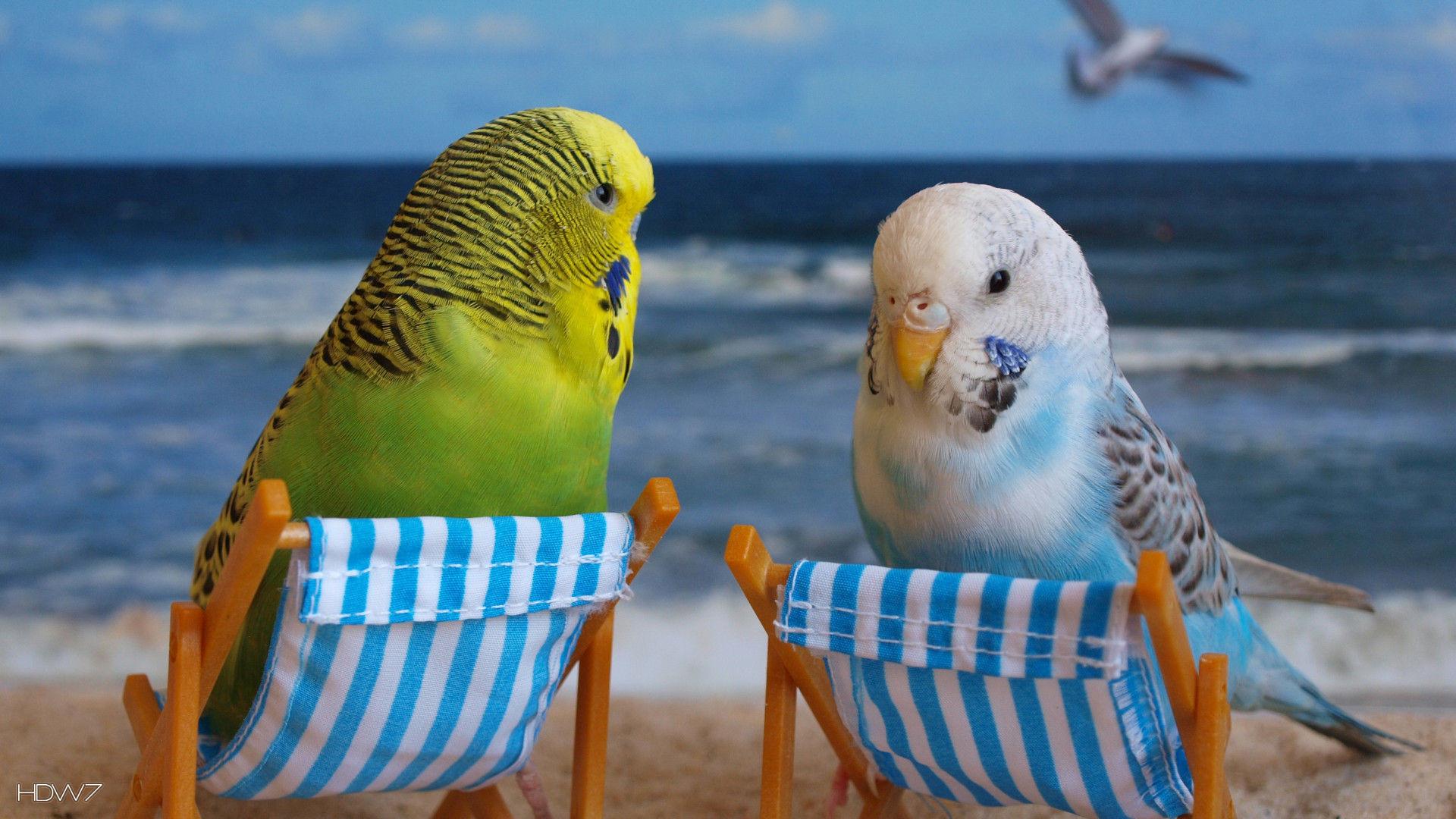 рад, картинки на аву про попугаев ненужные вещи складируются
