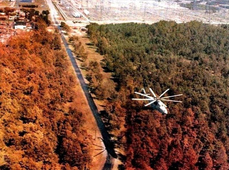 """""""Рыжий лес"""" Припять, Чернобыль, взрыв, катастрофа, радиация, факты, фото, чернобыльская катастрофа"""