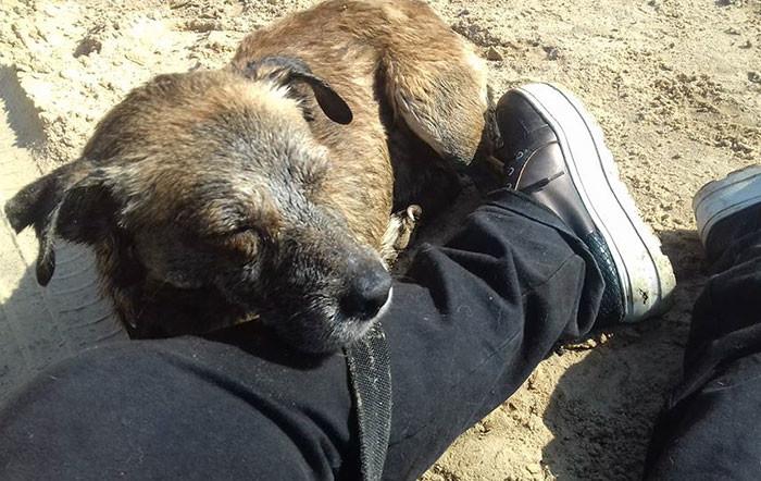 Мальчишки спасли собаку, упавшую в гудрон Счастливый конец, гудрон, жестокость, животные, нелегкая задача, происшествие, собаки, спасение