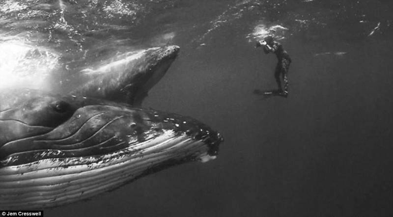 Так близко китов вы еще не видели! горбачи, животные, киты, миграция, путешествие, фото, фотопроект, чудо природы