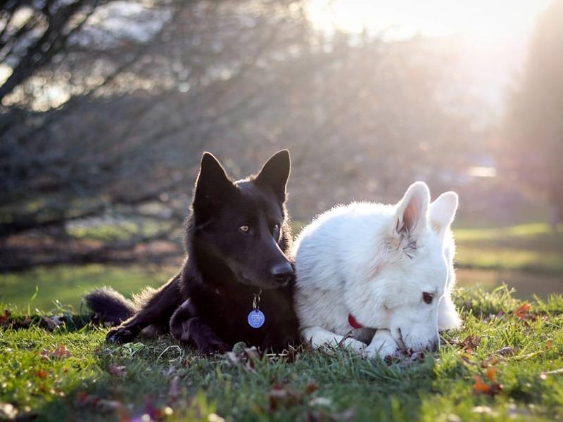 собаки пара фото заметить, что