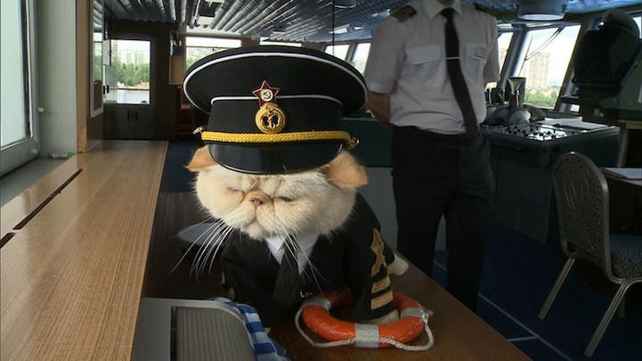 Смешные картинки капитана, мамонта настоящего картинка