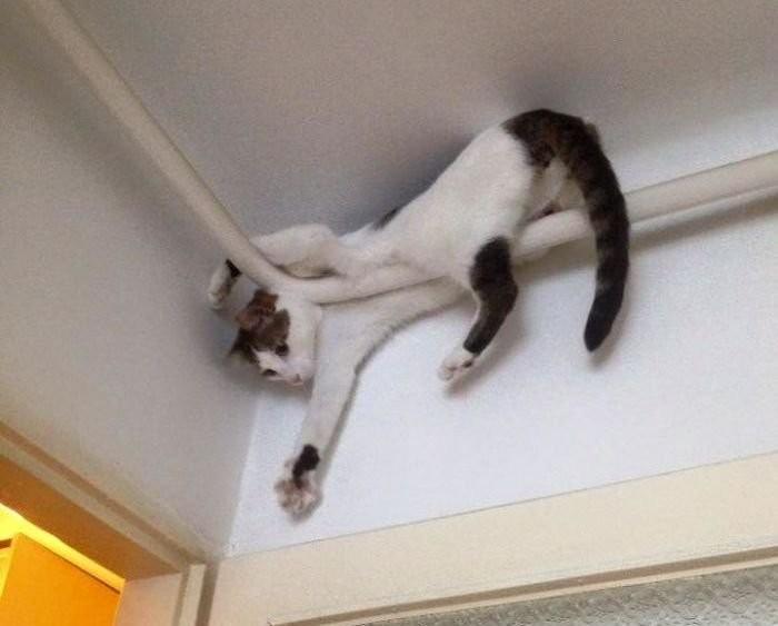 help getting my cat neutered