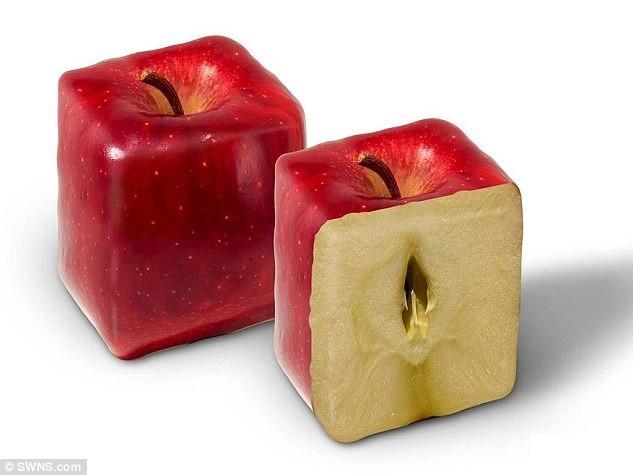 Квадратные яблоки? Легко. дизайн, китай, креатив, овощи, природа, ферма, фото, фрукты
