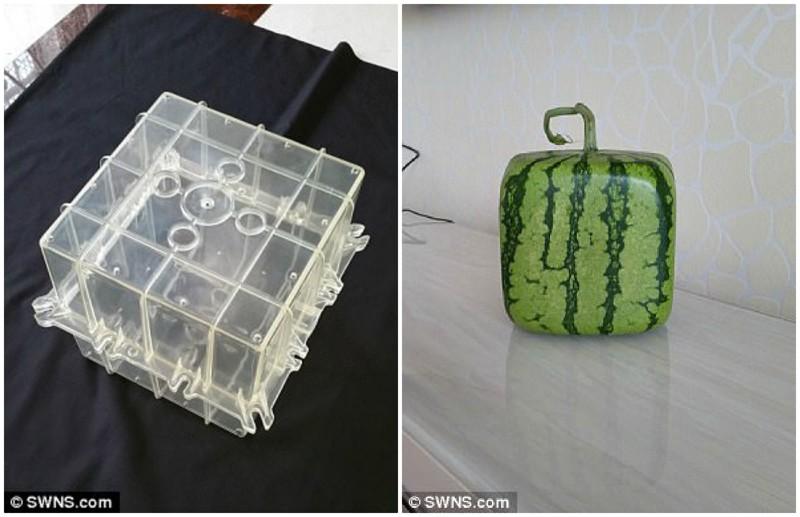 В Китае выращивают дизайнерские овощи и фрукты причудливых форм дизайн, китай, креатив, овощи, природа, ферма, фото, фрукты