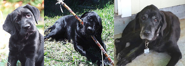 Дилайла в 4 месяца, в 3 года и в 17,5 лет до и после, животные, любимцы, мило, питомцы, собаки, трогательно, фото