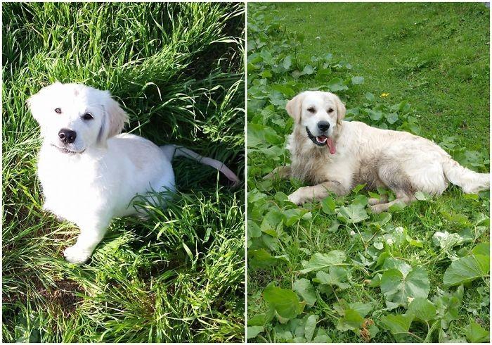 Как малыш вырос до и после, животные, любимцы, мило, питомцы, собаки, трогательно, фото