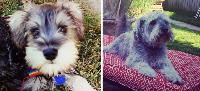 Джек - 9 недель и 5 лет до и после, животные, любимцы, мило, питомцы, собаки, трогательно, фото