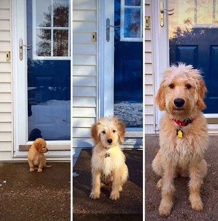 Сколько перемен за шесть месяцев! до и после, животные, любимцы, мило, питомцы, собаки, трогательно, фото