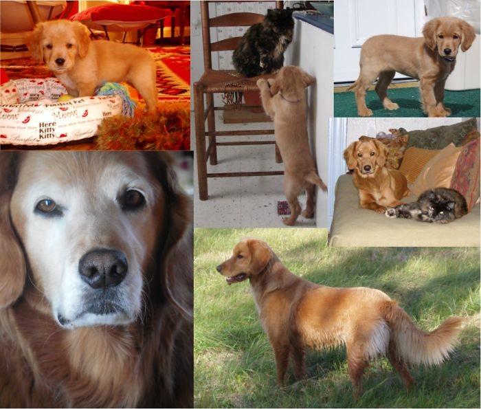 Энни растет до и после, животные, любимцы, мило, питомцы, собаки, трогательно, фото