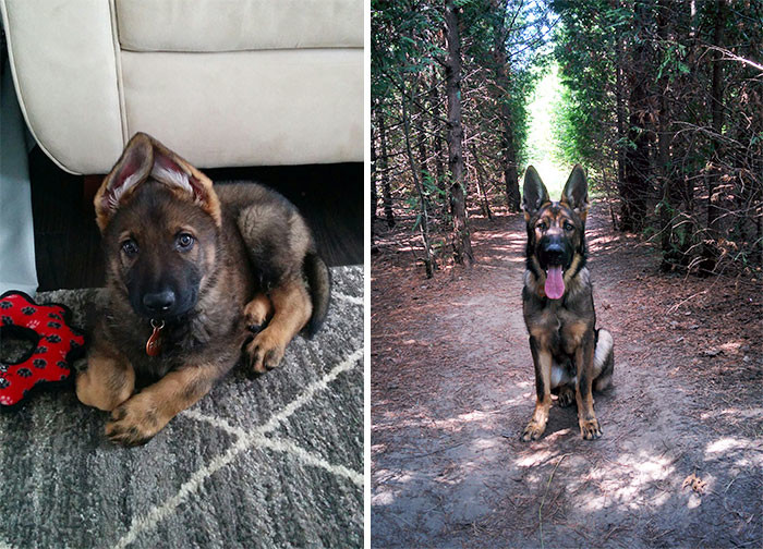 Два фото - в полгода и еще полгода спустя до и после, животные, любимцы, мило, питомцы, собаки, трогательно, фото