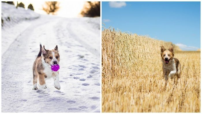 Рождественский подарок. С декабря по август до и после, животные, любимцы, мило, питомцы, собаки, трогательно, фото