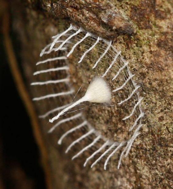 Яйца крошечного паука и выстроенная им вокруг ограда геометрия, красота, микросъемка, природа, удивительно