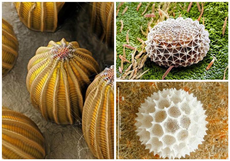 Яйца насекомых геометрия, красота, микросъемка, природа, удивительно