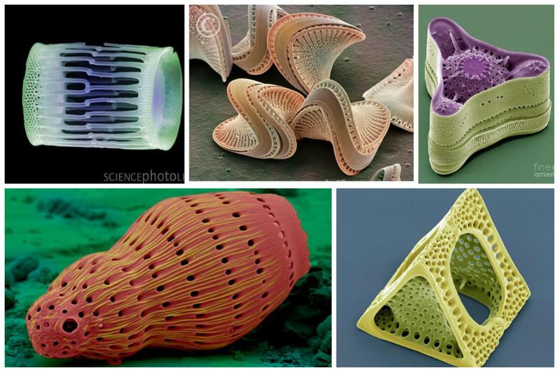 """Это все они. Их """"тело"""" это «панцирь», состоящий из диоксида кремния. геометрия, красота, микросъемка, природа, удивительно"""