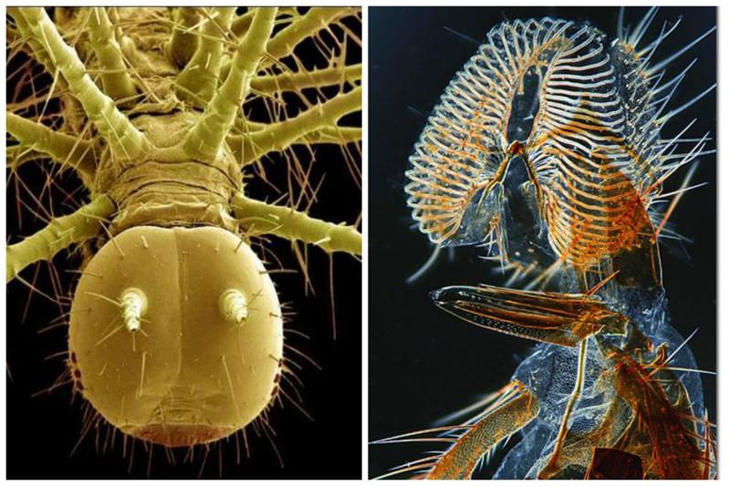 Мошки геометрия, красота, микросъемка, природа, удивительно