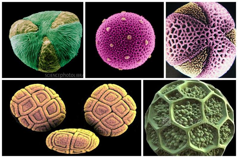Пыльца растений геометрия, красота, микросъемка, природа, удивительно