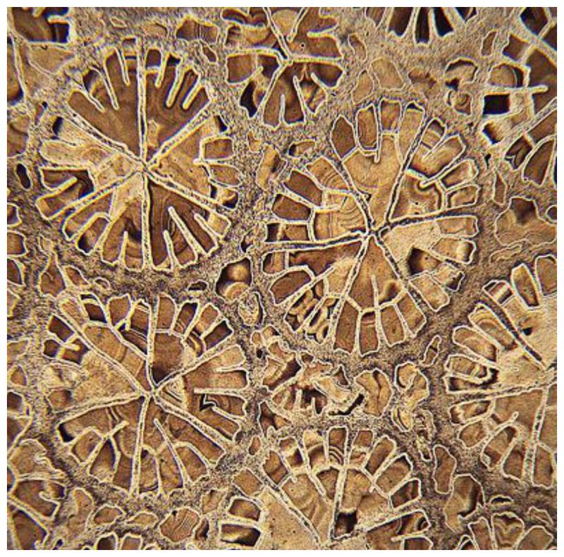 Коралловое сечение геометрия, красота, микросъемка, природа, удивительно