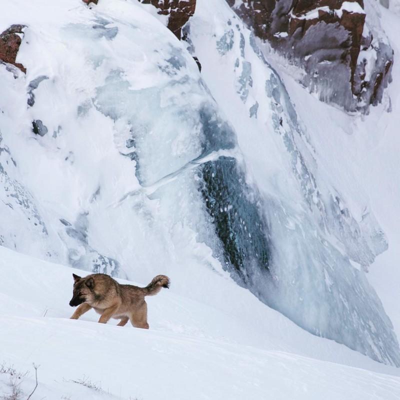 Териберка, Мурманская область водопады, водопады России, водопады зимой, замёрзшие водопады, красивые водопады, природа России