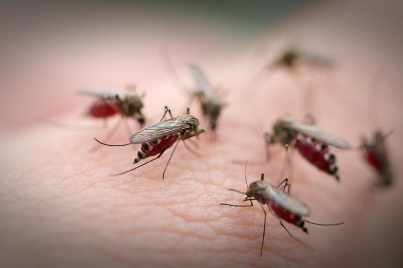 10 действенных «обрядов» для тех, кого достали комары и мошки интересное, комары, обряды, полезное