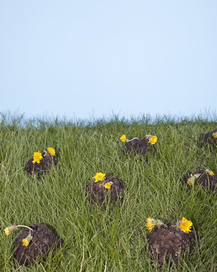 25. В Колорадо нельзя не выполоть все сорняки во дворе. Их просто не должно быть в мире, закон, люди, нелепость, прикол, сша, юмор