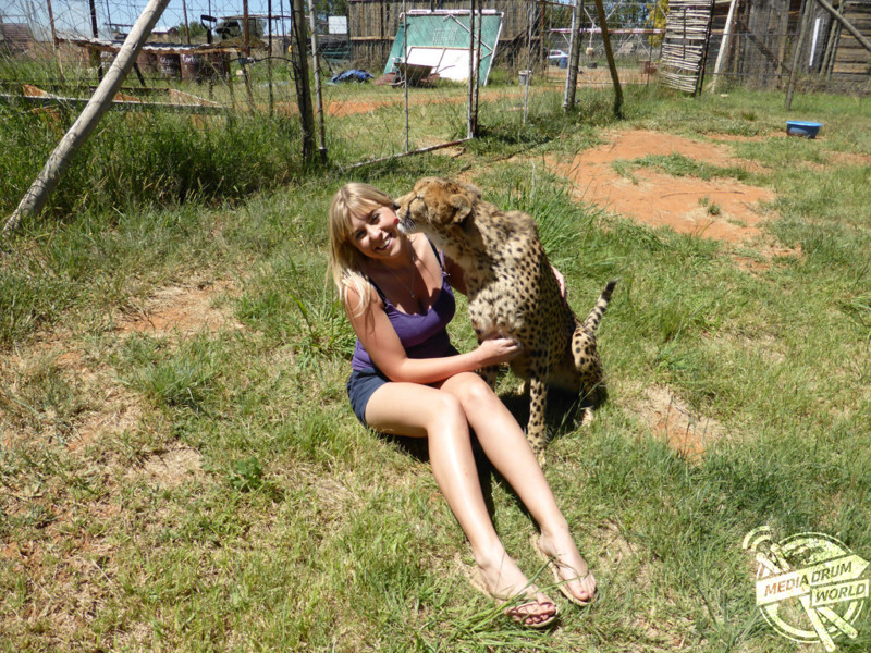 Она спасла котенка гепарда от охотников за трофеями, и он стал её лучшим другом в мире, гепард, животные, люди, охотник, спасение