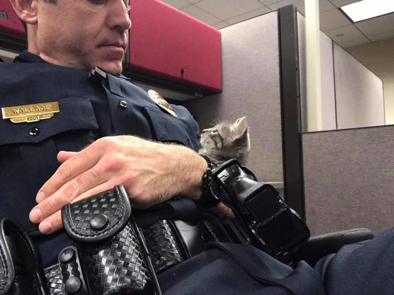 Полицейский всю ночь обнимал бездомного котенка, чтобы спасти его от одиночества в мире, добро, животные, котенок, люди, милота, полицейский