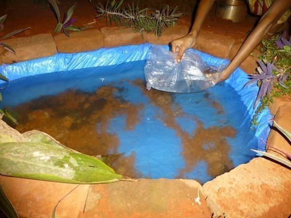 Можно добавить ещё и рыбок, но могут задохнуться в стоячей горячей воде благоустройство участка, дача, идея для дачи, как сделать, пруд своими руками, прудик