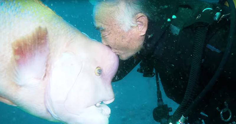 Странный друг дайвера верные друзья, дайвер, животные, море, подводные святилища, рыба, странная дружба, япония