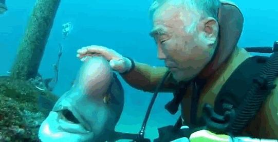 верные друзья, дайвер, животные, море, подводные святилища, рыба, странная дружба, япония