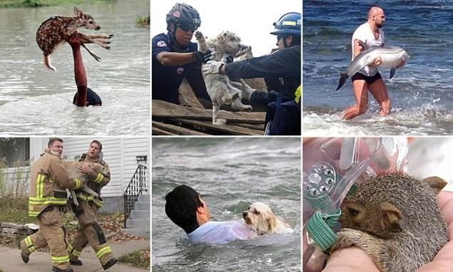 Эти люди рисковали жизнью, чтобы спасти животных герои, животные, несчастный случай, опасность, спасатели, спасение, уважение, фото