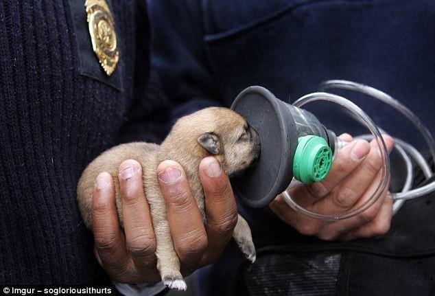 Команда с помощью кислородной маски спасает крохотного щенка герои, животные, несчастный случай, опасность, спасатели, спасение, уважение, фото