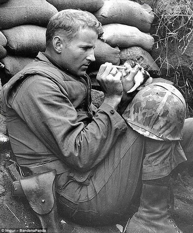 Корейская война. Сержант Фрэнк Прейтор кормит маленького котенка молоком из пипетки герои, животные, несчастный случай, опасность, спасатели, спасение, уважение, фото