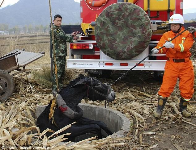 Китайские спасатели достают ослика, упавшего в колодец герои, животные, несчастный случай, опасность, спасатели, спасение, уважение, фото