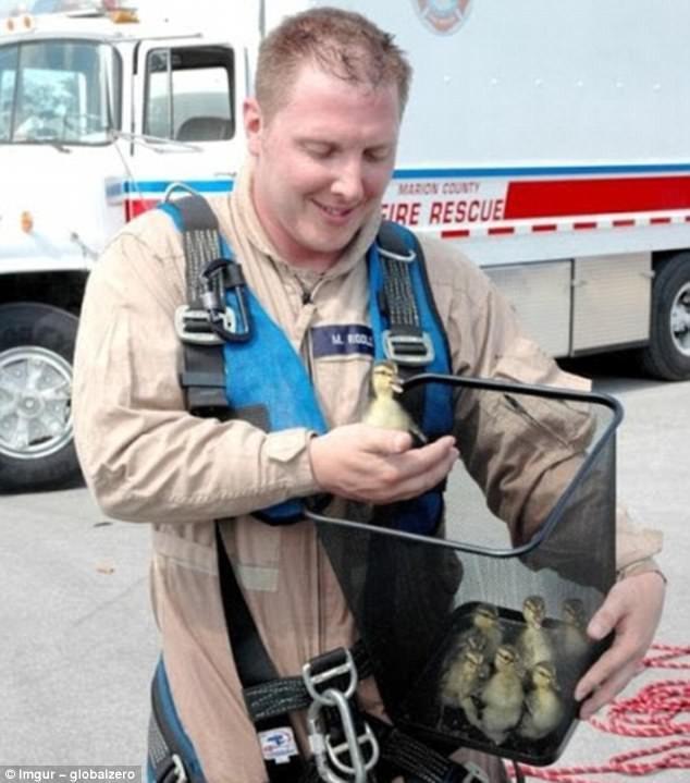 Счастливый пожарный, спасший маленьких утят герои, животные, несчастный случай, опасность, спасатели, спасение, уважение, фото