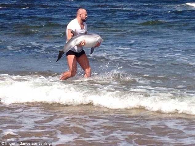 Прохожий спасает малыша дельфина, выброшенного на берег герои, животные, несчастный случай, опасность, спасатели, спасение, уважение, фото