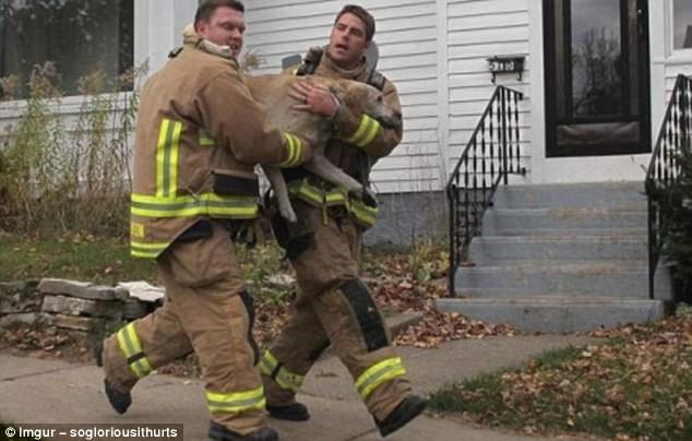 Пожарные спасли собаку из горящего дома герои, животные, несчастный случай, опасность, спасатели, спасение, уважение, фото