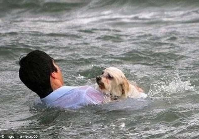 Мельбурн, Австралия. 20-летний турист из Германии спасает собаку, упавшую в море герои, животные, несчастный случай, опасность, спасатели, спасение, уважение, фото