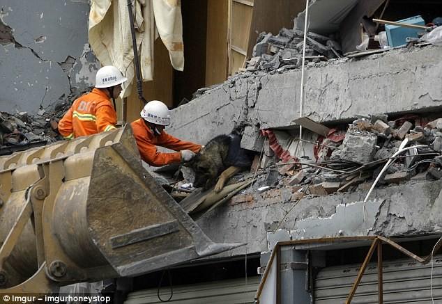 После стихийного бедствия в Китае: спасатели вытаскивают собаку из-под обломков здания герои, животные, несчастный случай, опасность, спасатели, спасение, уважение, фото