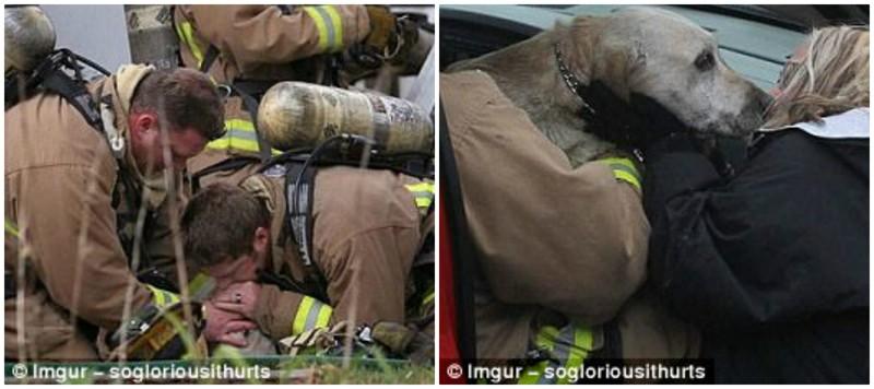 После проведения искусственного дыхания, настрадавшийся пес встретился с хозяйкой герои, животные, несчастный случай, опасность, спасатели, спасение, уважение, фото