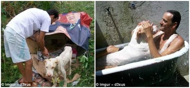 Этот мужчина спас брошенного пса от, казалось, неминуемой смерти герои, животные, несчастный случай, опасность, спасатели, спасение, уважение, фото