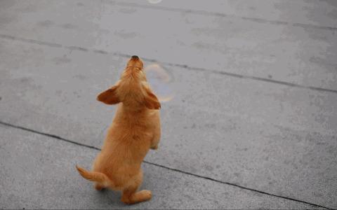 Анимашки, гифки смешные собаки